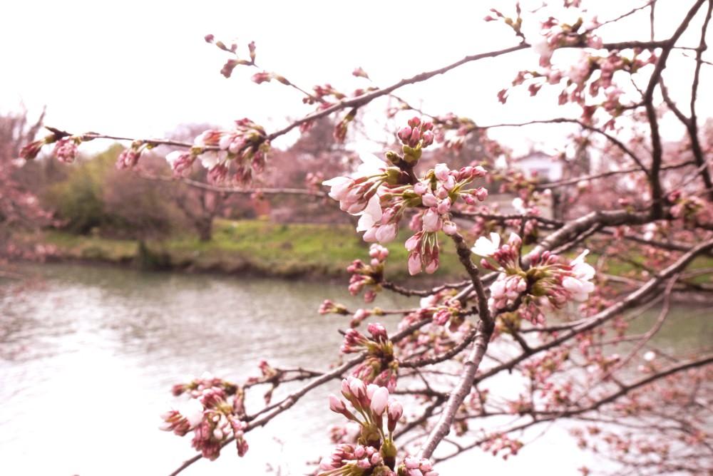 春の訪れのおかげ?