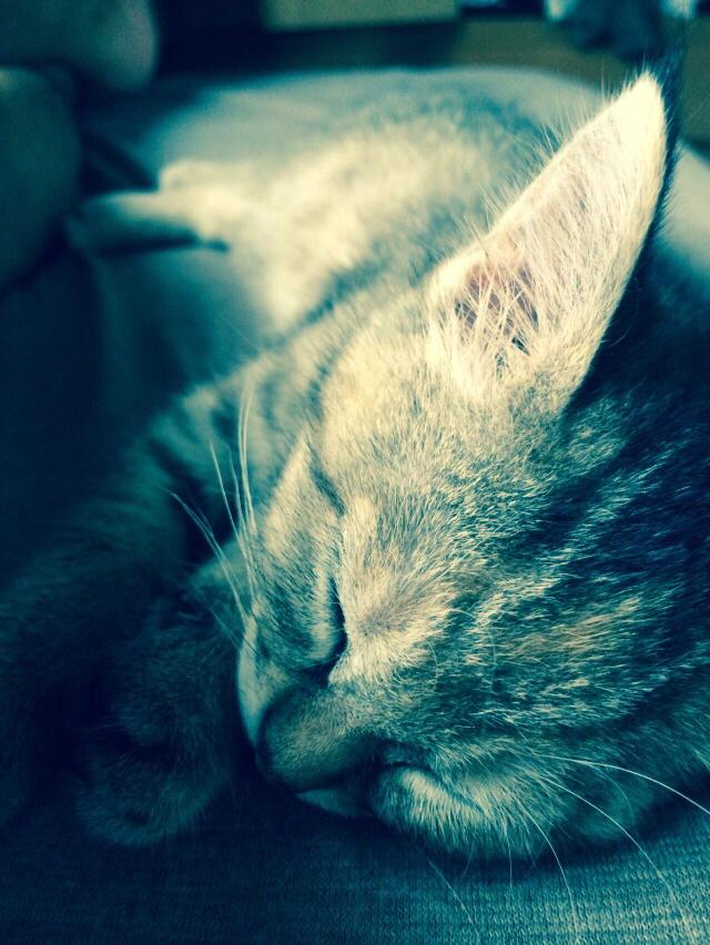 カグ猫は眠らない。でも、さぁ、みんなで唄をうたおうよ。ら。ラ。ら。どるちぃぇびぃたぁ。はっぴぃらいふ。ぐれいとらいふ。