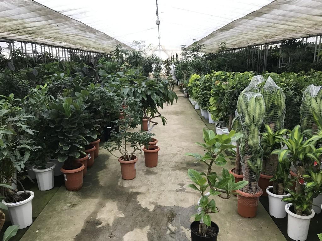 ミヤモト家具植物の仕入れ